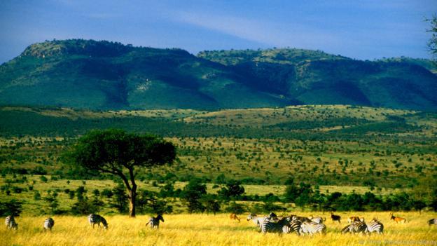 Modern insanlar, Afrika savanlıklarında ortaya çıkmıştır.