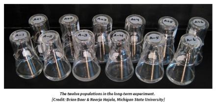 Uzun süreli deneyde kullanılan 12 popülasyon örneği.