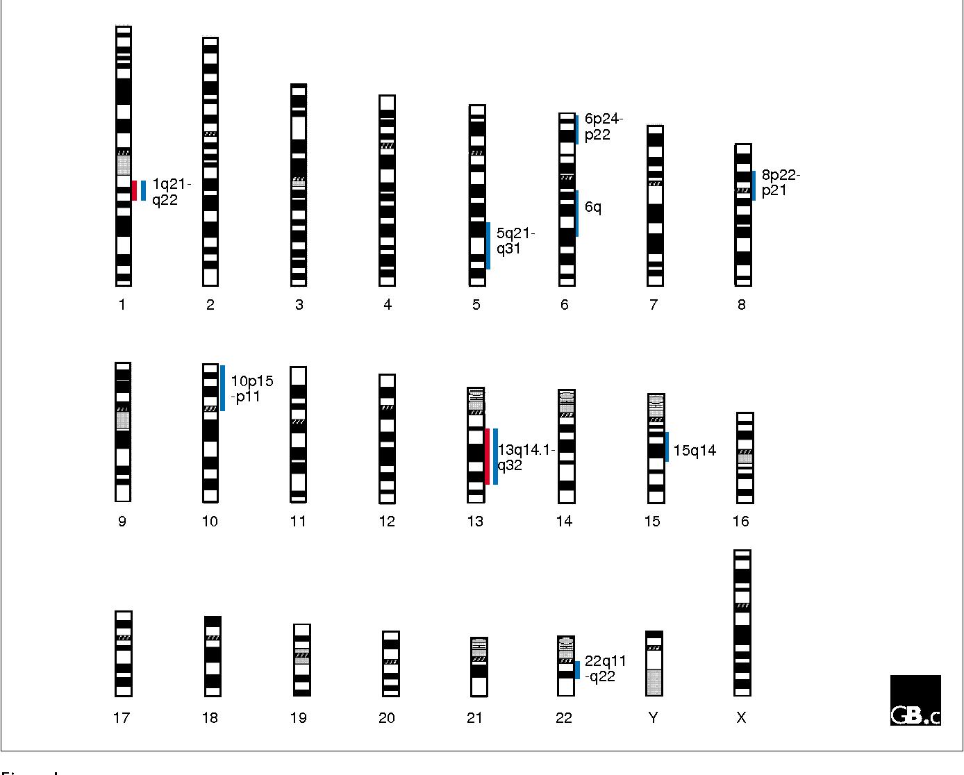 İnsanda 22 adet somatik (vücut) ve 1 adet eşeysel (seks) kromozomu bulunur.
