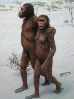 Uzatmamak adına, hızlı bir sıçrayışla 2-3 milyon yıl kadar öncesine gidersek, Australopithecus cinsine ulaşırız. Yani aynı soy hattını, sadece bireyleri akrabalık ilişkilerine göre, birbirine katarak ilerlediğimizde, fiziksel farklılıklar artık o kadar fazla birikir ki, Homo cinsinin bile dışına çıkmış oluruz. Bu canlılara baktığınızda da, gidip