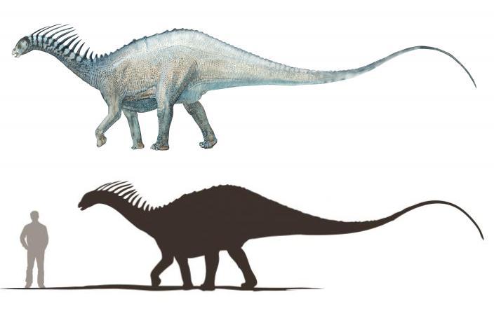 İlk olarak 1984'te keşfedilen ve 1991'de tanımlanan Amargasaurus cazaui türü.
