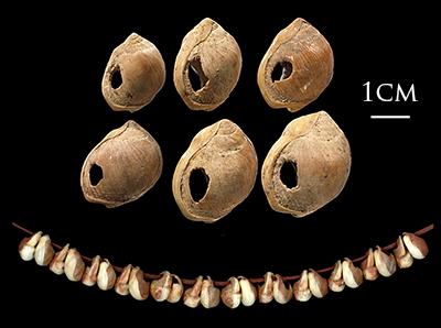 İsrail'deki Şkul Mağarası'ndaki bu boncuklar bulunduklarında aslında bir avuç delikli deniz kabuğu yığını hâlinde duruyordu. Görselin alt kısmında görebileceğiniz şekilde bir ip geçirilerek kolye olarak kullanıldıkları düşünülüyor. Tam 110 bin yaşında, dünyanın belki de en eski moda ürünlerinden biri.
