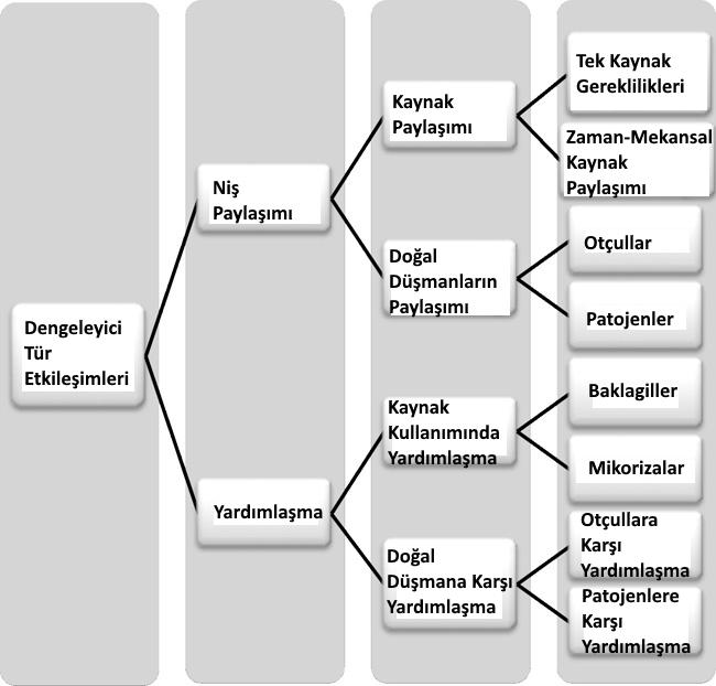 Görsel 4. Çeşitli dengeleyici tür etkileşimi tiplerinin göreceli önemini belirtmek için kullanılabilecek ağaç önerisi. Küresel ekosistem değişikliklerinin bu dengeleyici tür etkileşimleri üzerindeki etkisini ve bu etkileşimlerin biyoçeşitlilik, ekosistem işleyişi ve ekosistem dengesi üzerindeki etkilerini belirlemek için yeni çalışmalar düzenlenebilir.