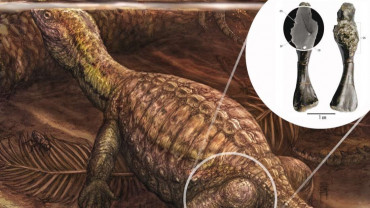 İlkin Kaplumbağa Fosilinde Kemik Kanseri!