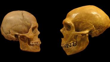 İnsan Evrimi Hattındaki Bütün Fosiller Atalarımız Mı?