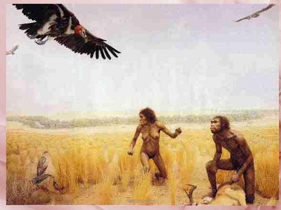 Et temelli hepçil bir diyete sahip Homo ergaster türünden bir av görüntüsü; günümüzden 1.8 MYÖ