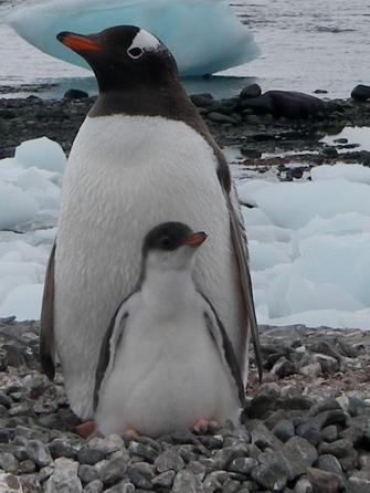 Görsel 3. İklim değişikliği, insan dışındaki hayvanlar ve doğanın geri kalanıyla nasıl ilişki kurmamız gerektiği hakkında ciddi soruları gündeme getirmektedir.