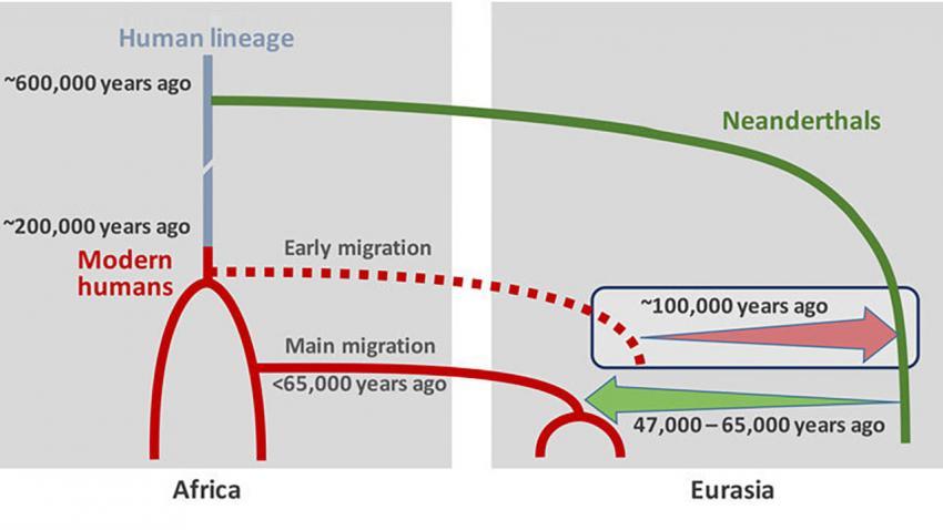 Neandertaller (yeşil) ve modern insanların (kırmızı), düşünülenden çok daha önce melezleştikleri görünüyor.