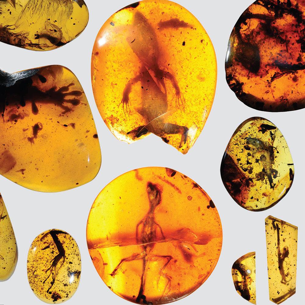 Myanmar'da bulunan ve yaklaşık 100 milyon yıl öncesinden kalan kehribar içinde saklanmış bütün halde bir yavru kertenkele ve diğer fosil örnekler.