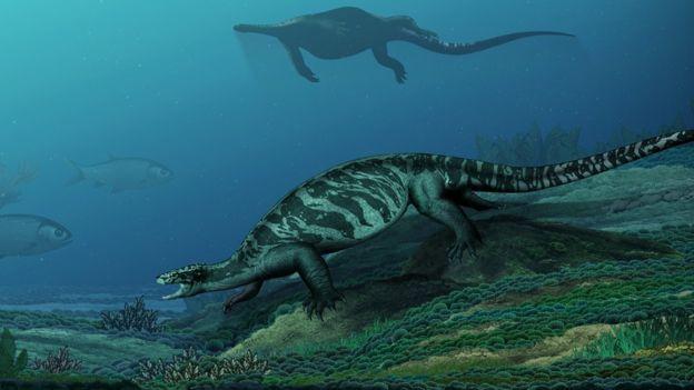 Ön kaplumbağaların davranışlarını gösteren bir illüstrasyon.