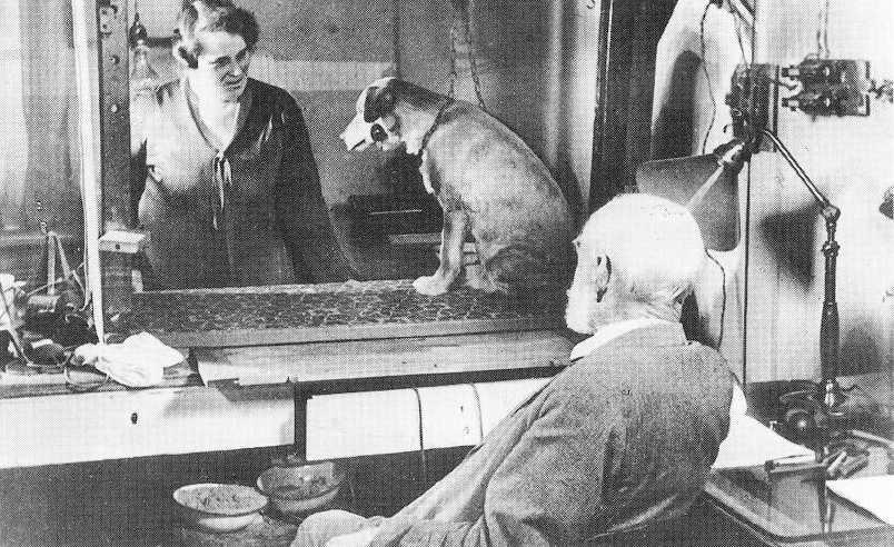 Pavlov'un Köpek Deneyi Düzeneği