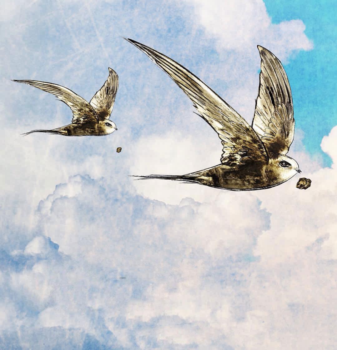 Muhammed'in bildirdiği ebabil kuşlarının taşıdığı taşlarla fil ordusunun yenilmesi mucizesi...