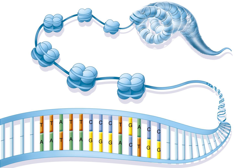 Kromatin ve Histonlar