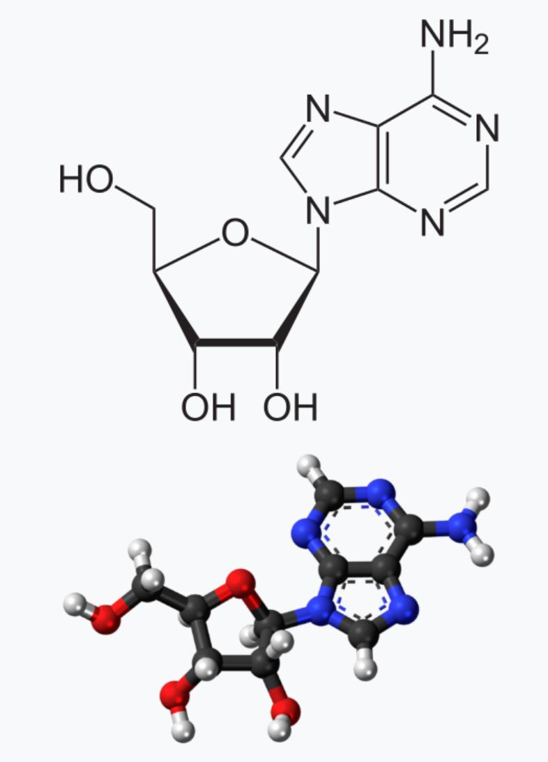 Adenozin