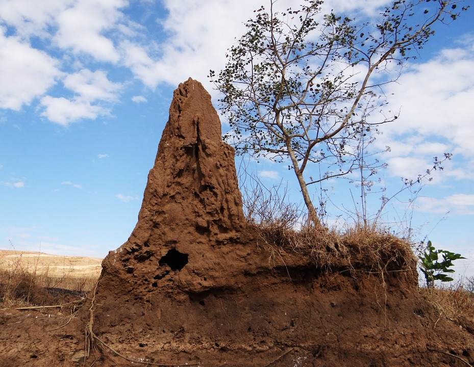 Görsel 5: Bir termit tepeciği