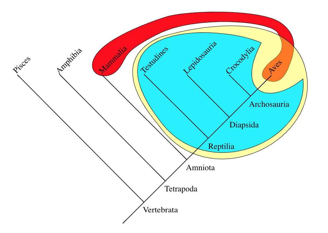 Kırmızı ile çizilen bölge homeotermik (sabitsıcaklı) hayvanları göstermektedir.