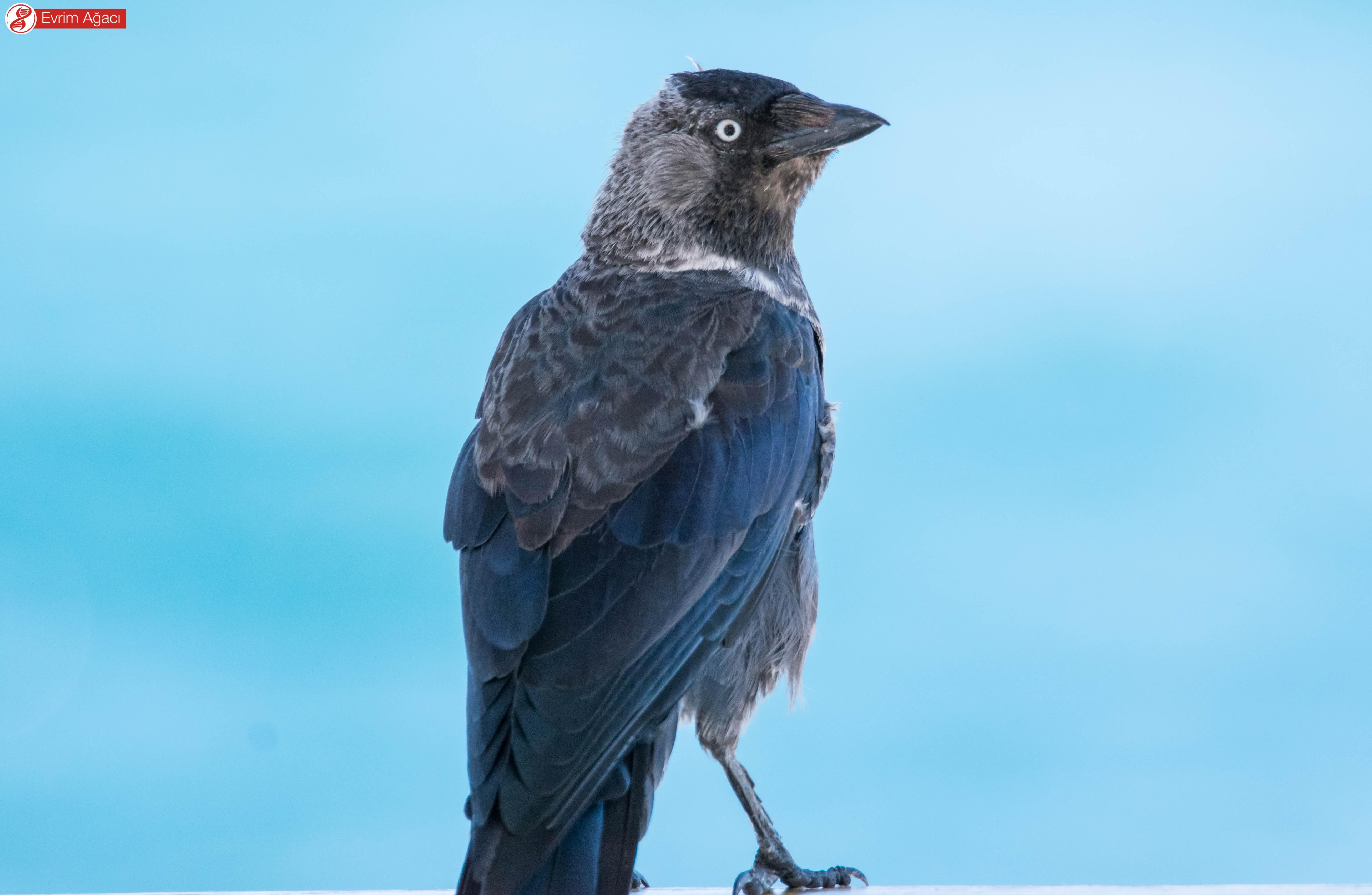 Çanakkale'de gözlemlediğimiz bir başka birey.