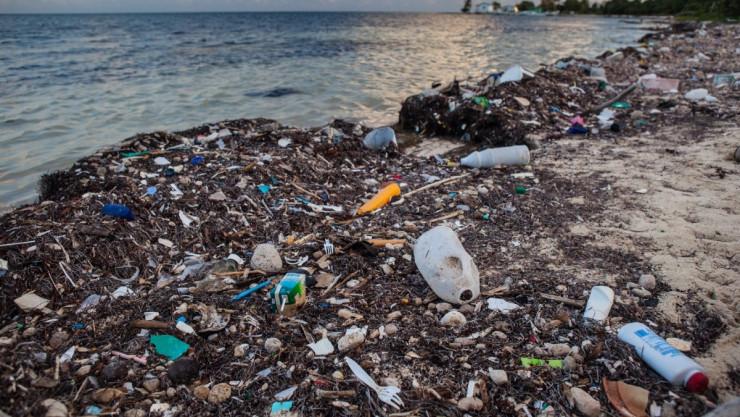 Deniz Temizliğinde Önemli Atılım: Türkiye, Verimi Arttırılmış Doğal Emici Madde Üretti!