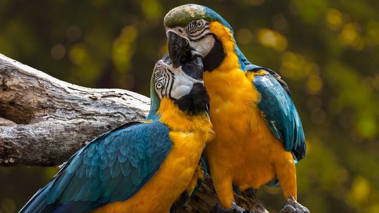 Kuş Tüylerinin Rengi Nasıl Oluşur?