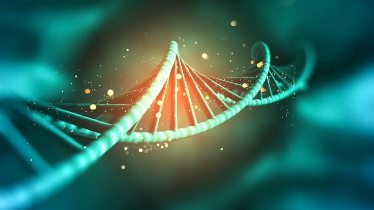 Temel Genetik Kavramları: Nükleobaz, Nükleosit, Nükleotit, DNA, RNA, Gen, Kromatin, Kromatit, Kromozom...
