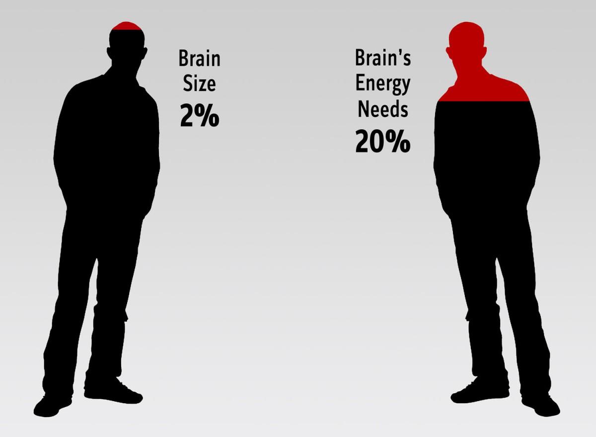 Beyin vücudumuzun kütlece sadece %2'sini oluştursa da, tüm enerjimizin %20'sini tüketir.