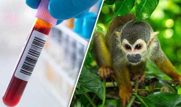 HIV enfeksiyonu ve Yeni Dünya maymunu.