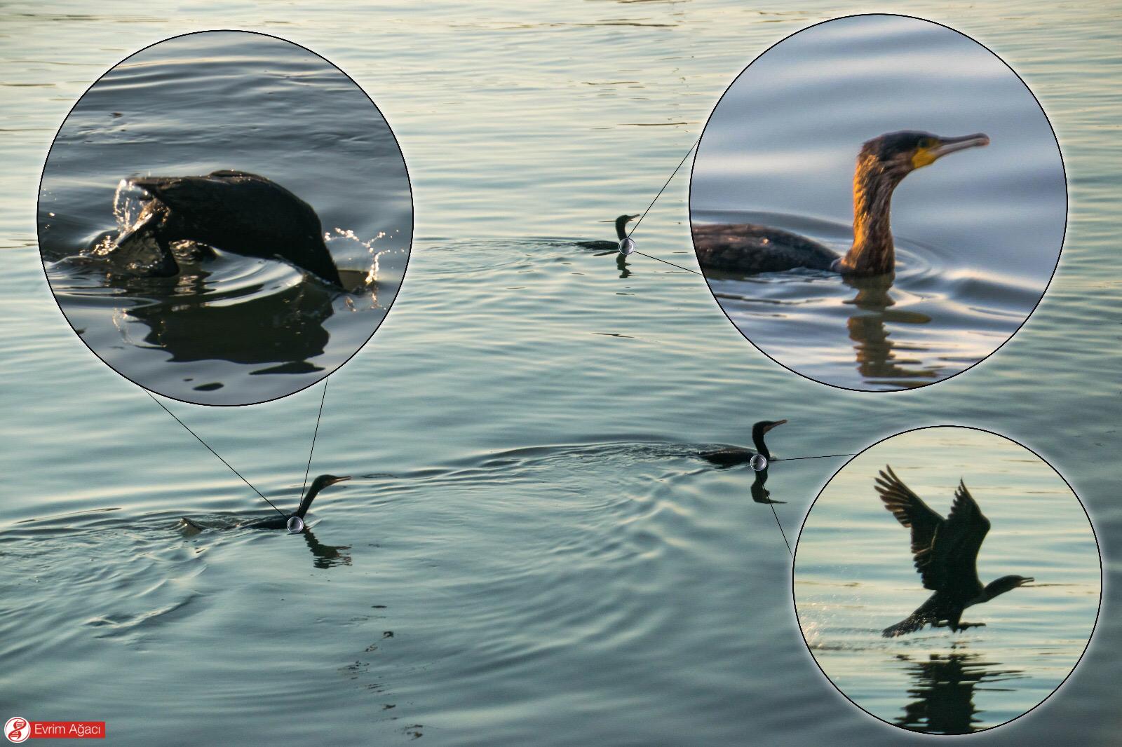 Zonguldak limanında balık tutan insanlardan geçinmeye çalışan 3 birey.