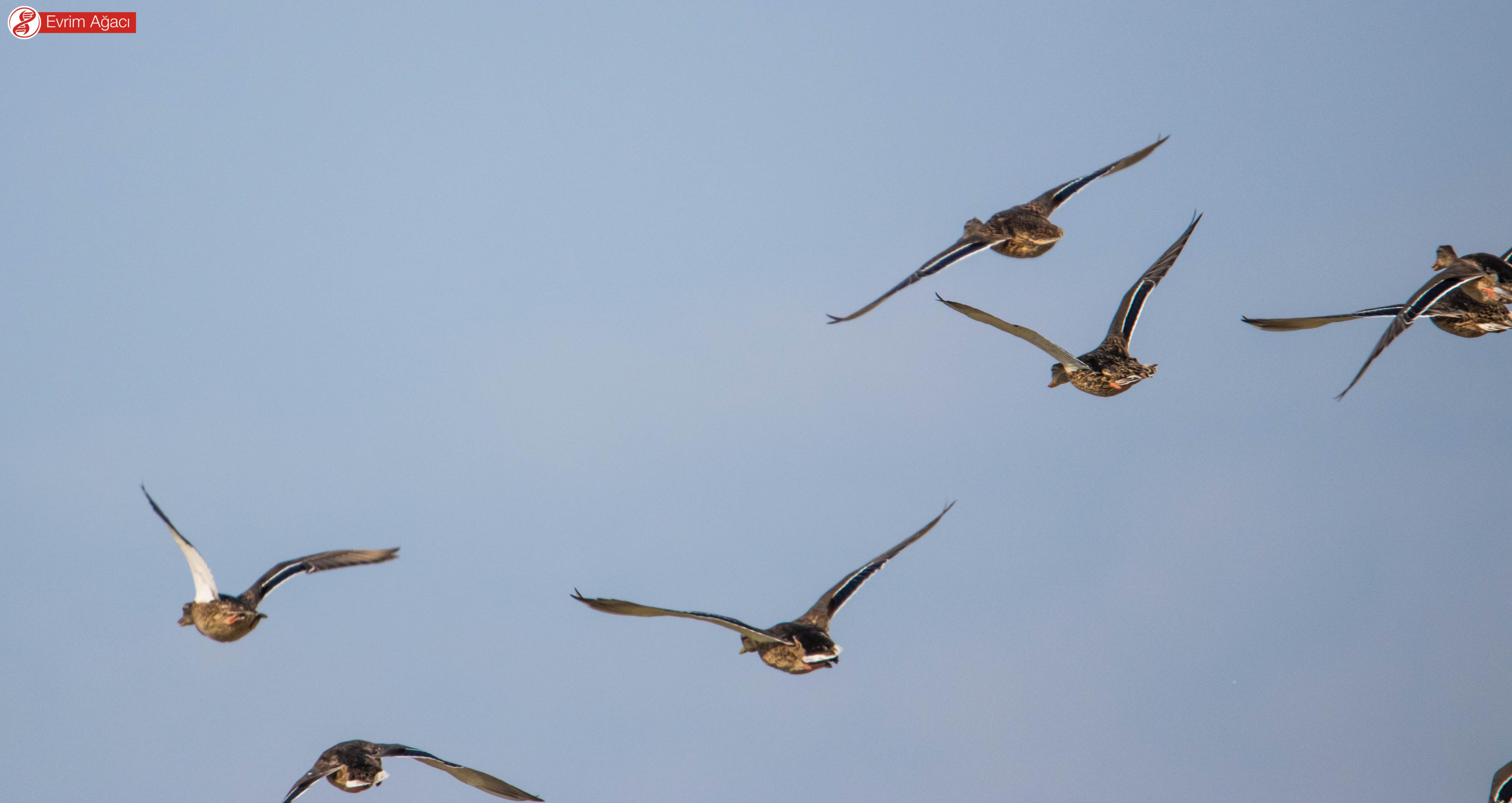 Yeni havalanan bir grup dişi.