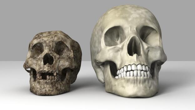 'Hobbit' (solda) kalıntıları sadece bir ada üzerinde bulundu.
