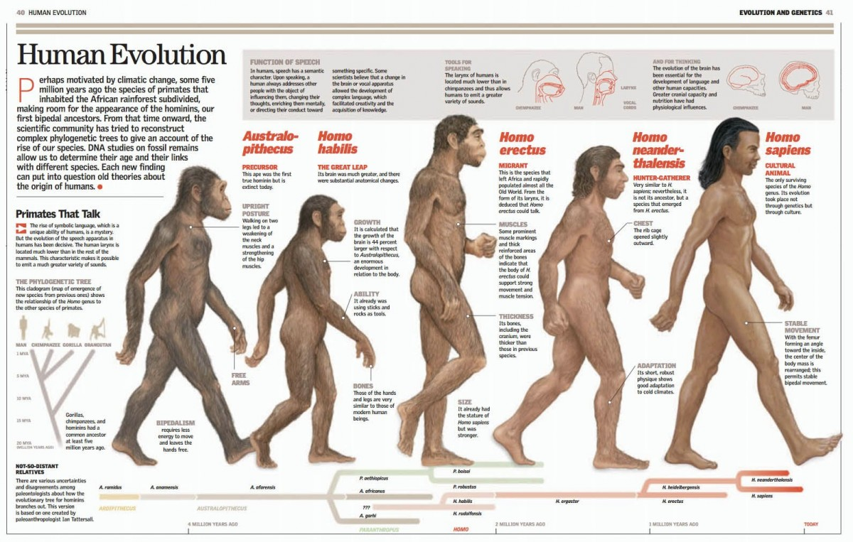 Bu grafikte Australopithesinlerden günümüze kadar insana giden evrimsel soy hattındaki ortalama vücut büyüklükleri görülmektedir. Görebileceğiniz gibi, belli bir dalgalanma söz konusu olmakla birlikte asla ciddi bir büyüme veya küçülme söz konusu olmamıştır.
