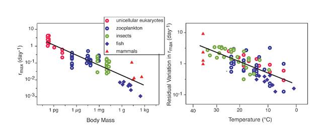 Grafikte, artan vücut büyüklüğüne oranla ısı değişimi farkı algoritmik olarak gösterilmektedir. Vücut kütlesi büyüdükçe,vücut ısısı değişkenliği azalmaktadır.