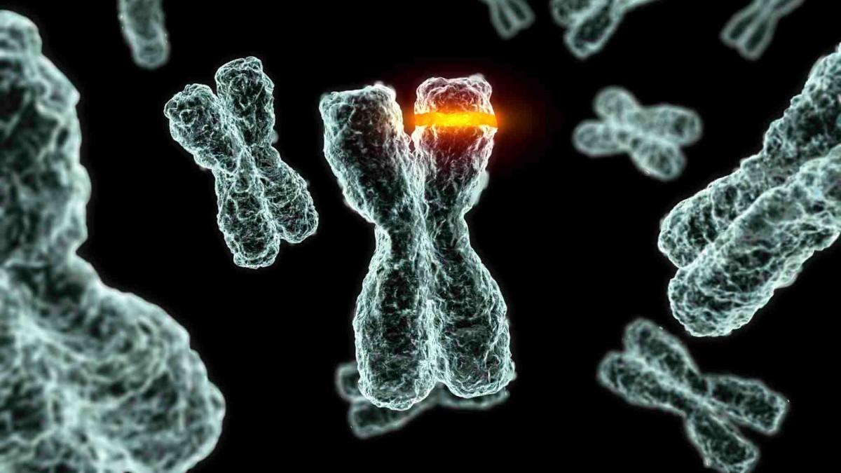 Mutasyona uğramış canlılar genetigi degişmiş canlılar