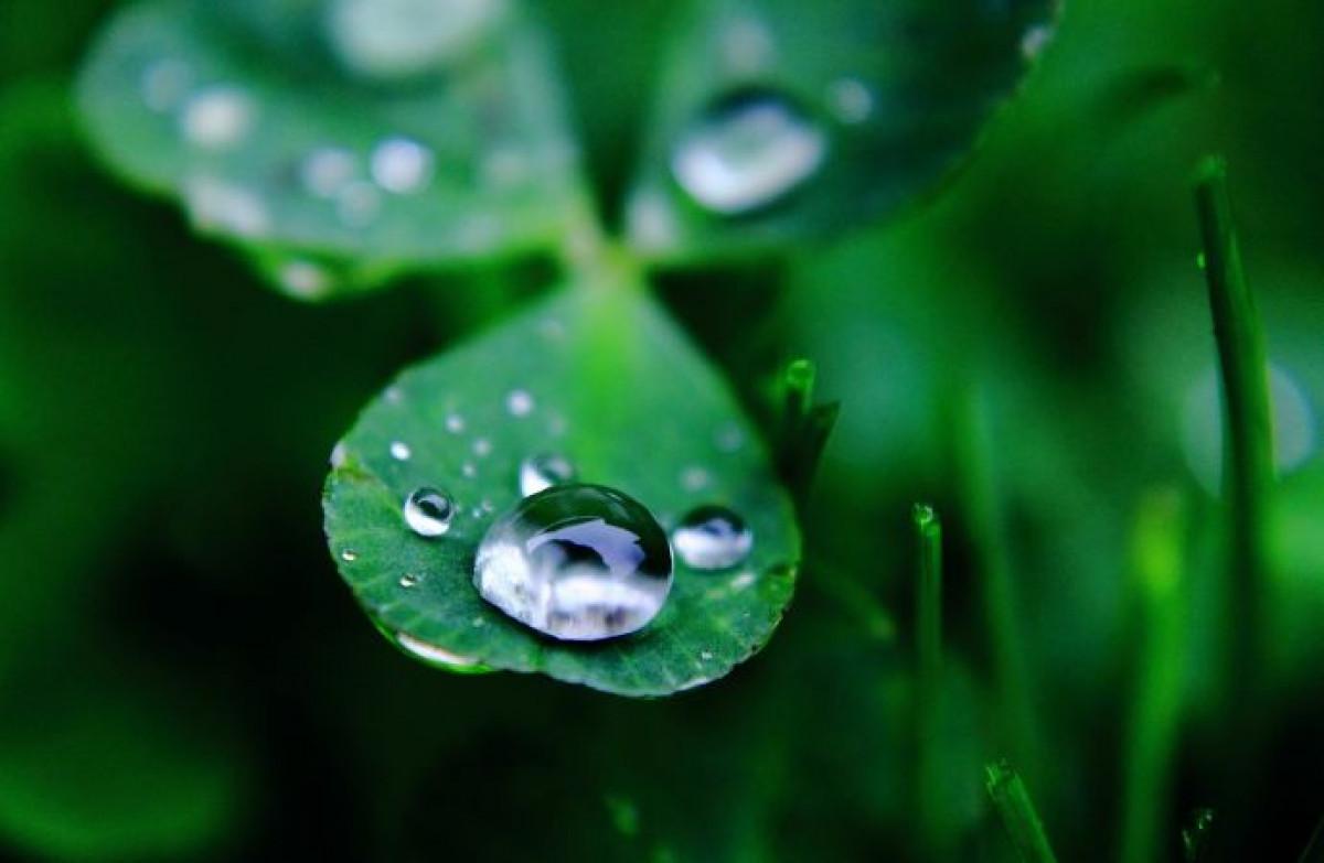 Suyun biyolojik rolü. Hayat su olmadan mümkün mü