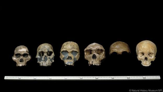 Evrim süreci boyunca birçok hominin türü bulunmaktaydı.