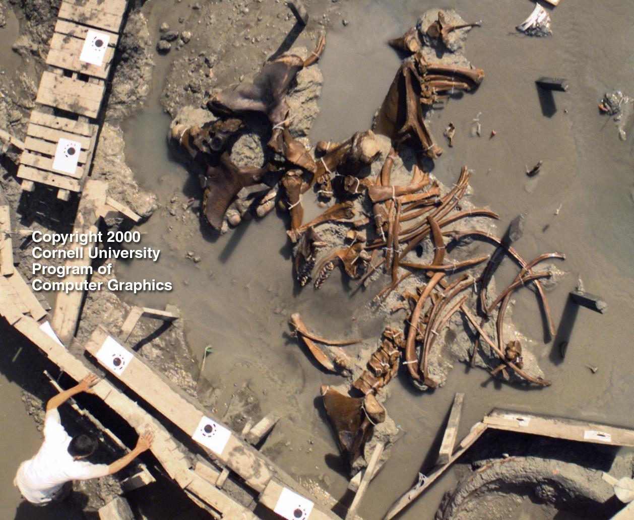 Cornell Üniversitesi'nden araştırmacıların Mastodon fosili üzerinde çalıştıkları bir kare.