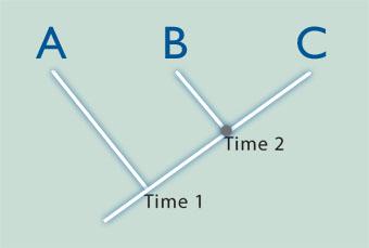 Filogenetik ilişki ile geçmişte türlerin ortak ataları paylaştığı göreceli zamanlar organize edilir. Örneğin şekildeki B ve C türlerinin ortak ataları daha yakın bir zamana tekabül eder; Time 2. A,B ve C türlerinin ortak atası ise Time 1 ile gösterilmiştir.