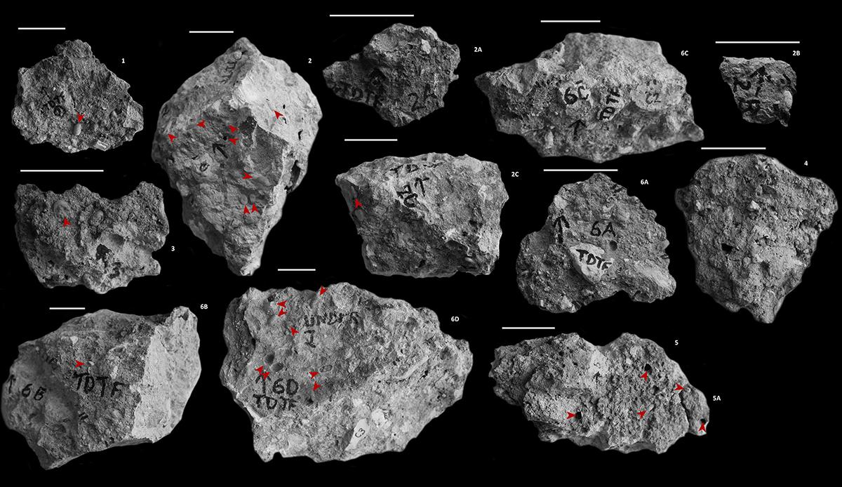 Arı fosili çevreye dair kanıtlar sunuyor.