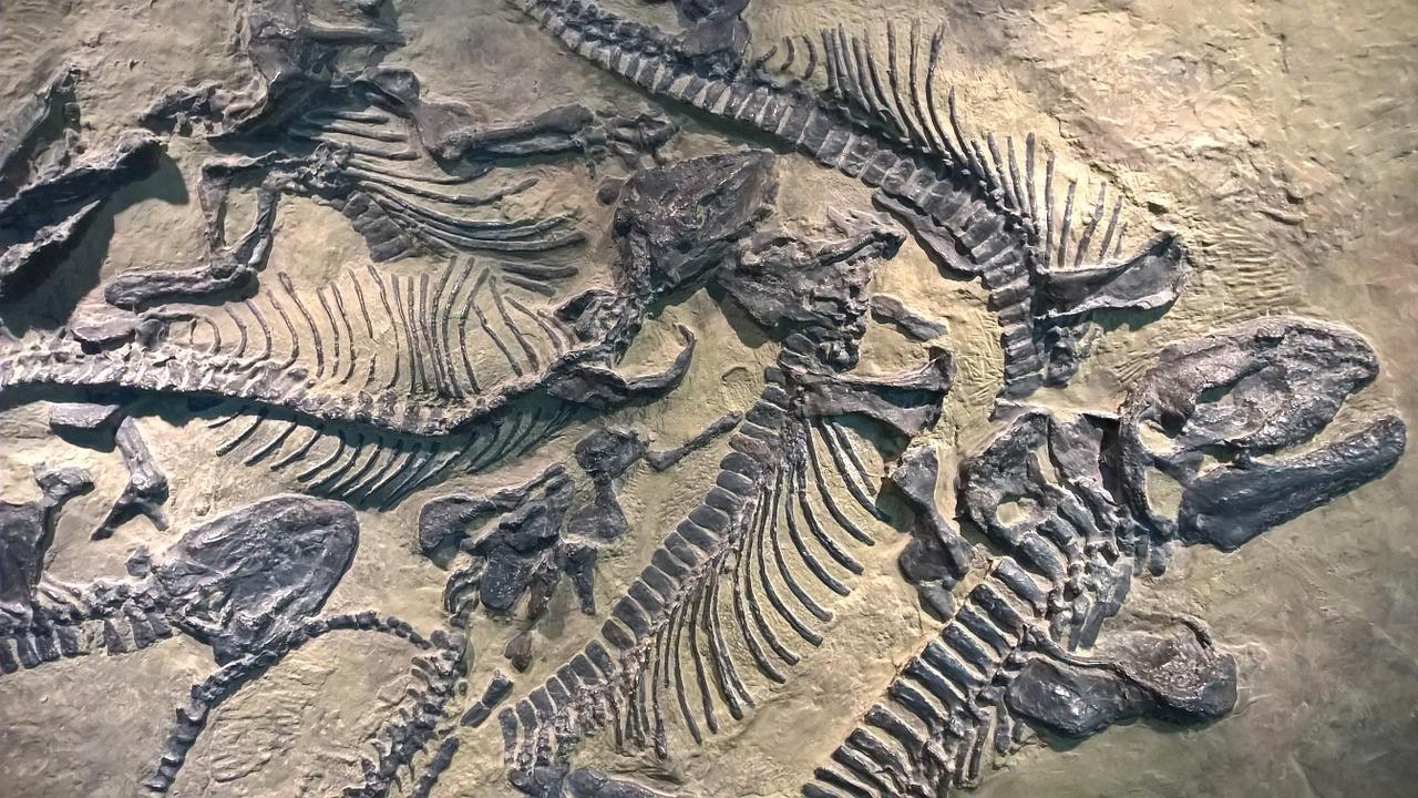 Dinozor Fosilleri