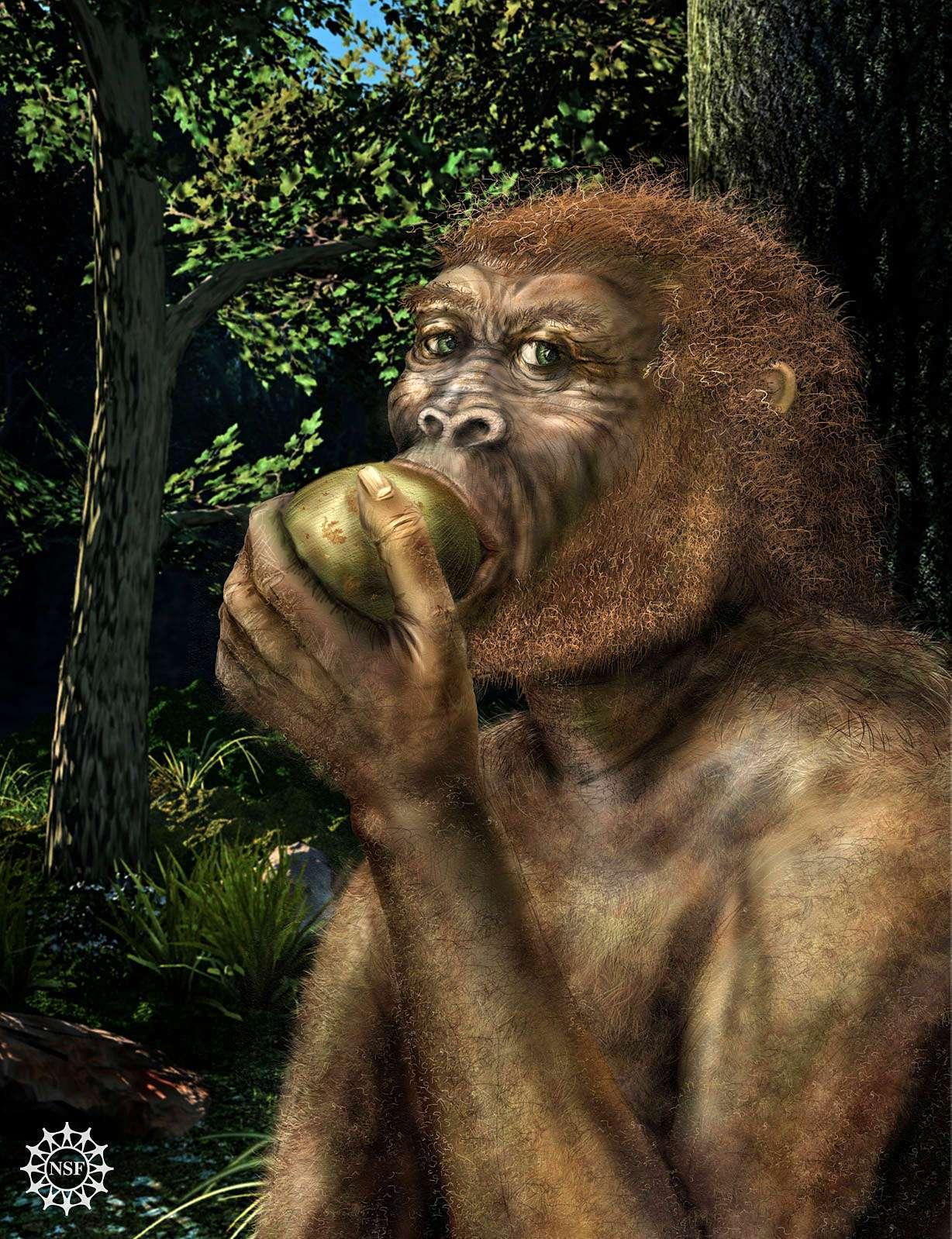Paranthropus boisei türü olan, Homo cinsinin yakın kuzenlerinden bir birey meyve yerken; günümüzden 2 milyon yıl önce...