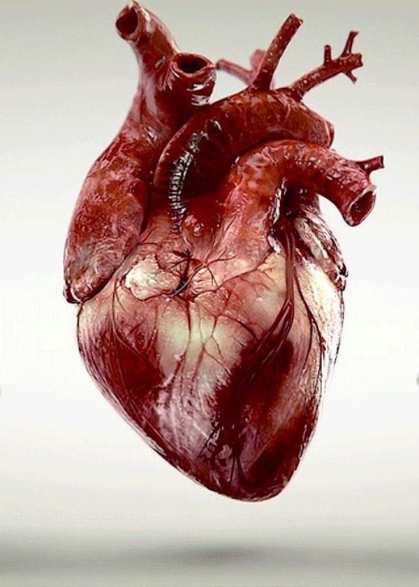 Gerçek bir kalbin şekli...