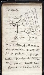 Charles Darwin'in 1837 yılında günlüğüne çizdiği yaşam ağacı