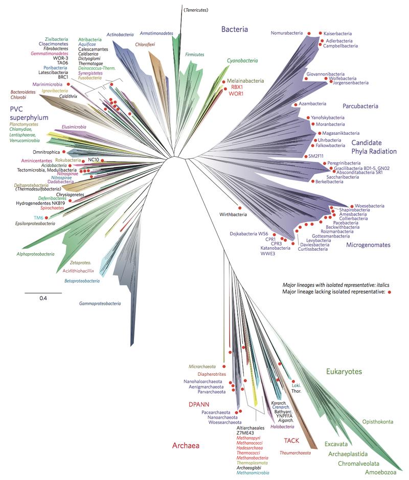 2016 yılında Nature'de yayınlanan makalede yer alan yaşam ağacı taslağı; A new view of the tree of life. Bu yeni metodun amacı genom dizileri üreterek, organizmaları ve onların metobolik kapasitelerini aydınlatmak ve ekosistemdeki yerlerini bulmaktır.