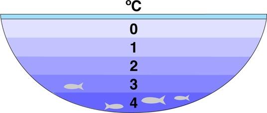 Tatlı su gölleri dipten değil de tepeden donmaya başlar. Buz su yüzeyinde kalır çünkü yoğunluğu sudan daha azdır. Bu yüzden donmuş göllerde balıklar ve diğer canlılar suyun sıvı olduğu yerlerde yaşayabilir.