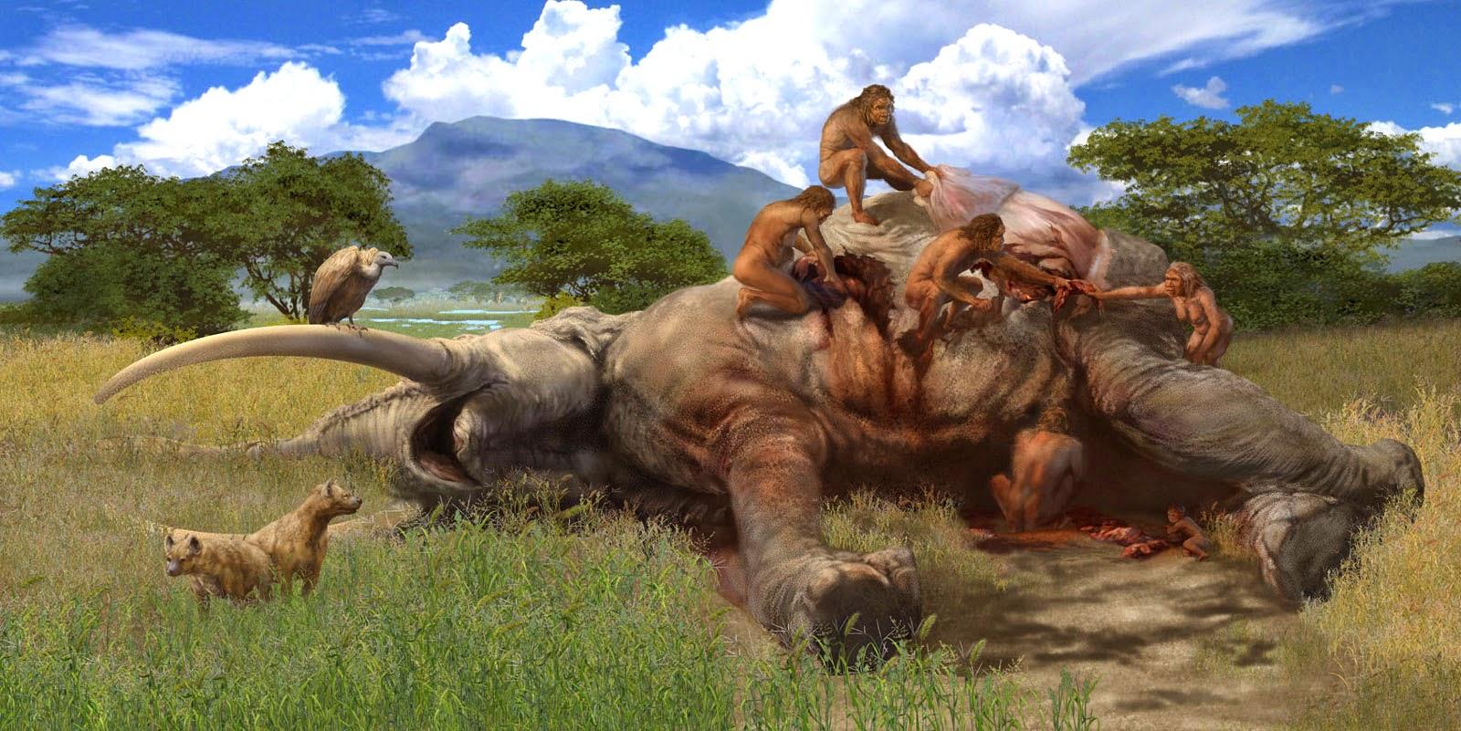 Fil ile beslenen bir grup Homo cinsi. Yanlarında akbaba ve sırtlanlar.
