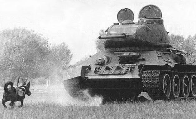 Sovyetler'in Anti-Tank Köpekleri