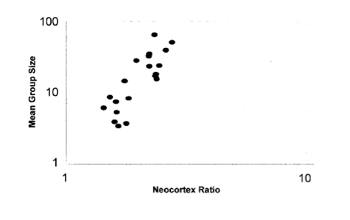 Gerçekten de ortalama grup büyüklüğü ile neokorteksin beyne oranı arasında doğrusal bir ilişki bulunmaktadır. Neokorteksi büyük memelilerde ortalama grup büyüklüğü de fazladır. Yani sosyal yaşantı, beyin evrimini tetiklemekte ve desteklemektedir.
