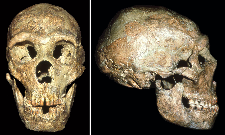 Neandertal Fosilleri