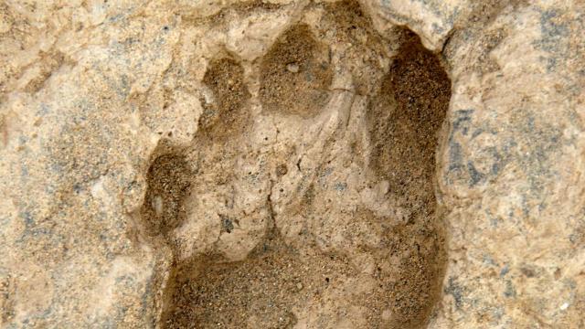 1,5 milyon yıllık ayak izleri