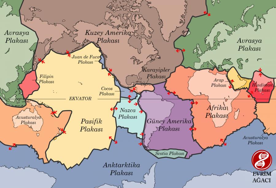 Dünya'da şu anda bulunan plakalar ve bunların hareket yönleri... Türkiye'nin, daha doğrusu Anadolu'nun, yeşil renkte gösterilen Avrasya Plakası'nın ucunda olduğuna dikkat ediniz. Bu plakanın hemen güney doğusunda sarı renkle gösterilen Arap Plakası'nın, hemen güney batısında ise ten rengiyle gösterilen Afrika Plakası'nın bulunduğuna dikkat ediniz. Bu plakaların birbirleriyle etkileşimleri, depremlerin ana nedenidir.