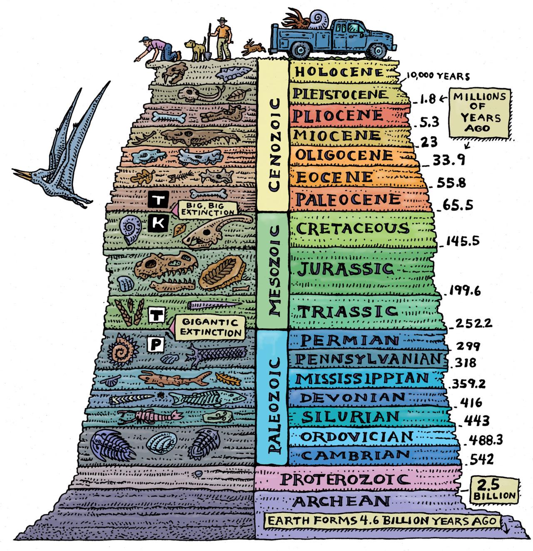 Jeolojik Katmanlar ve Fosiller...